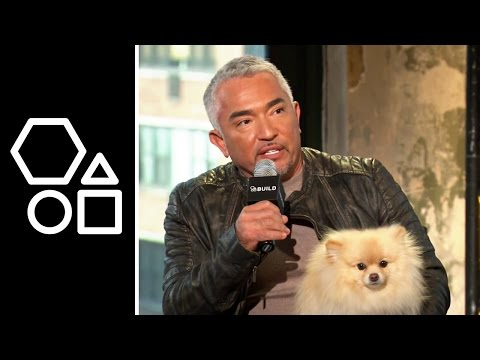 Dog Whisperer with Cesar Millan | AOL Build