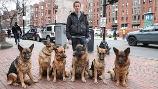 Dog Whisperer: Trainer Walks Pack Of Dogs Without A Leash thumbnail