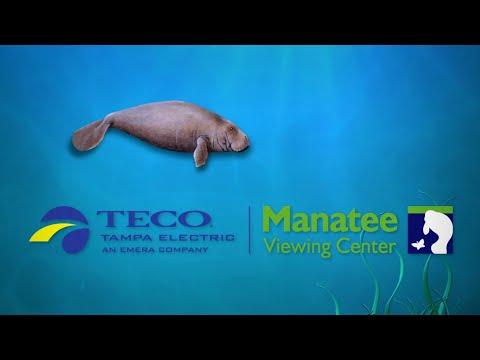Tampa Electric's Manatee Viewing Center 2019-2020 Season