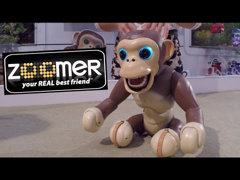 New Zoomer Chimp Interactive Monkey Robot First Look Demo Toy Fair
