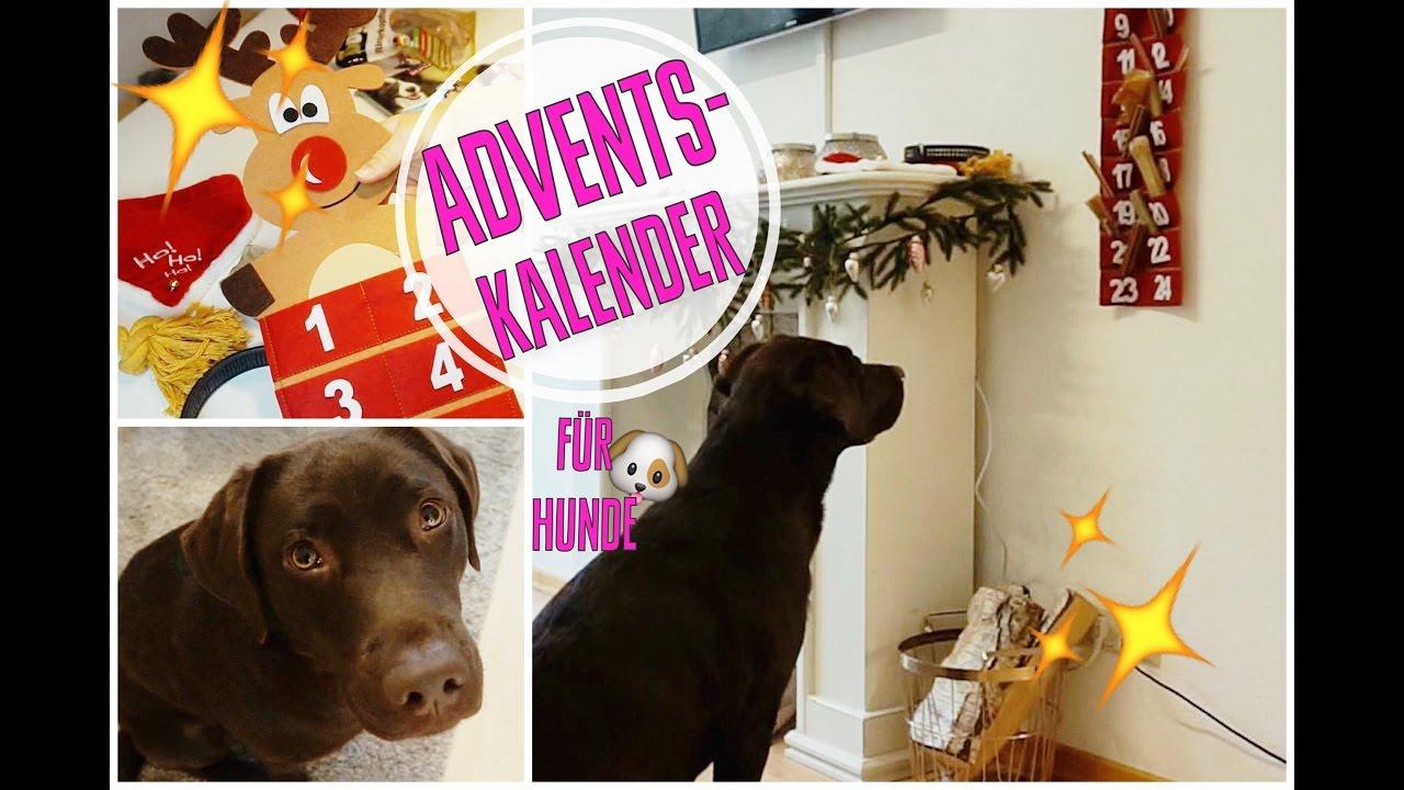 Weihnachtskalender Für Hunde.Adventskalender Für Hunde
