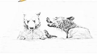 Auto Draw 2: Brown Bears Playing, McNeil River, Alaska