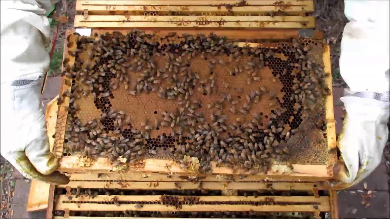backyard beekeeping part 25 s4 e2 hive split youtube