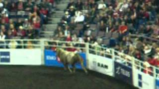 Rodeo Bull Jumps Into Crowd At Rexall Place In Edmonton Alberta.MOV
