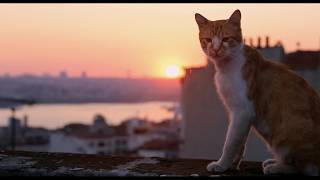 Город кошек (Документальный / США, Турция/ 6+/ в кино с 30 ноября 2017)