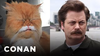 Cats Who Look Like Ron Swanson