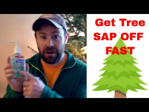 How To Get Sap Off Your Car