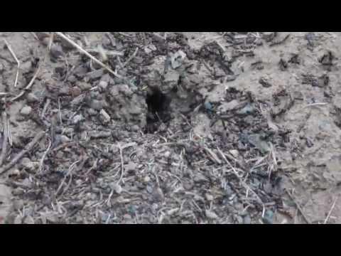 Ameisen stürmen in