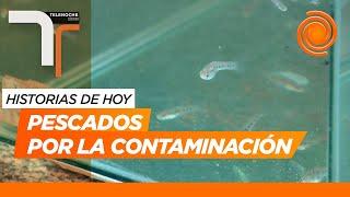 Pescados por la contaminación: lo que el Río Suquía lleva a la Laguna Mar Chiquita