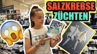 Ich züchte SALZKREBSE - Celina