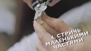 Смотреть видео такса сломала зуб