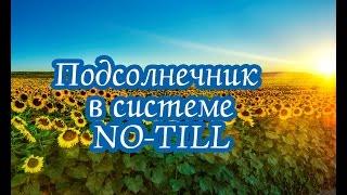 Особенности выращивания подсолнечника по технологии NO-TILL в условиях Крыма