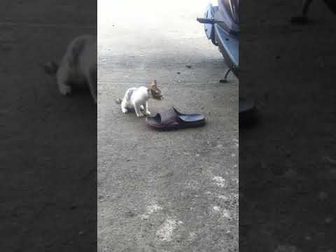 kittens are playing with ?? the fate of street cats so