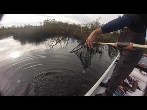 SPECKLED TROUT FISHING SWANSBORO NC