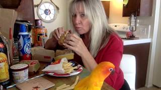 MEXICAN COFFEE & a McDonald's MUKBANG with my SUN CONURE!