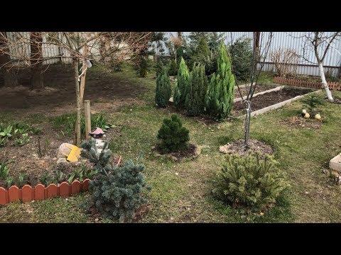 Моя любимая дача 7 апреля 2020. Провожу вторую обработку любимого сада. Открыла все хвойные.❤️