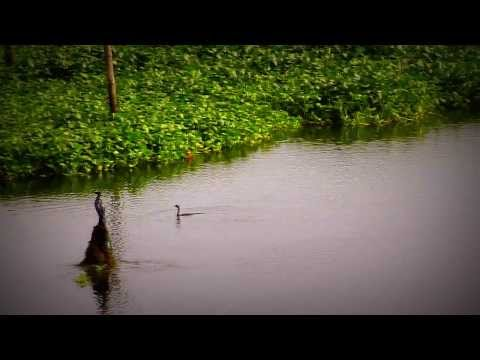 Colors of Nature  [ Short Film ] World Environment Day