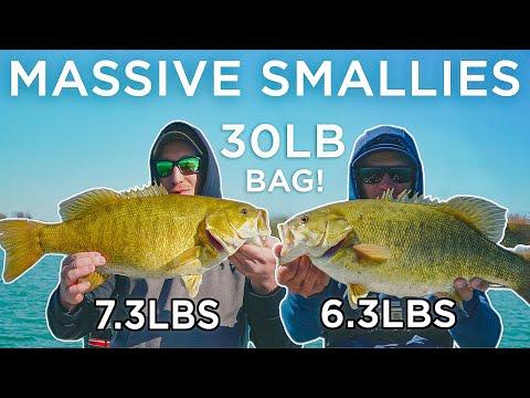 Lake St. Clair Has MASSIVE SMALLMOUTH BASS! (INSANE)