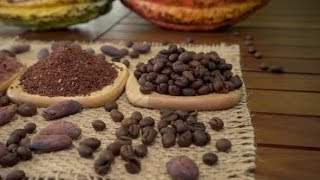 Coffee Beans, Cacao Nibs, Cocoa Powder, Raw Cocoa Fruit, Cacao Beans on Burlap | Stock Footage -