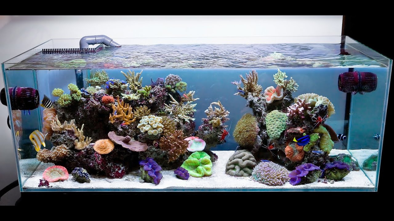 beautiful marine tank of 1000 gallon with big fishes youtube. Black Bedroom Furniture Sets. Home Design Ideas