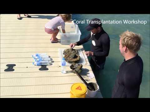 Coral Reef Creator - Le Meridien Koh Samui Shoreline Enhancement Project