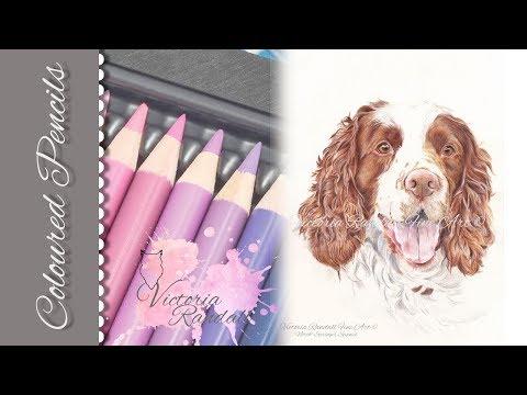 Coloured Pencils I Dog Portrait I Victoria Randall Fine Art