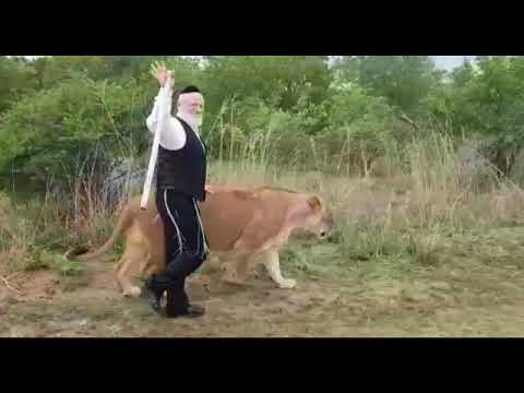 Meshi-Zahav attacked by lioness (Media Resource Group)