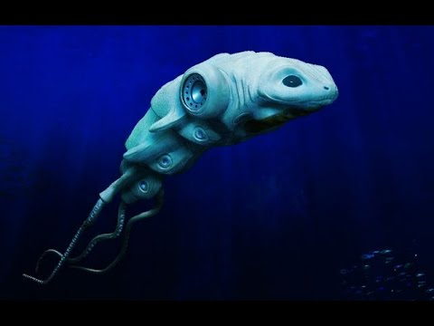 National Geographic Animals 2015 Creatures Of The Deep Ocean ...