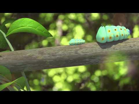 Trường KENT - Đồ án 3D về vòng đời bướm