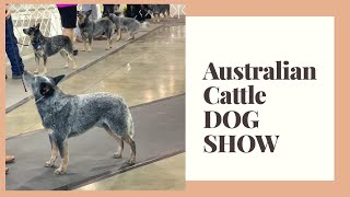 AUSTRALIAN CATTLE DOGS  DOG SHOW  ACDs at KC of Beverly Hills