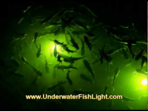 catfish invade underwater dock lights in cape coral florida, Reel Combo