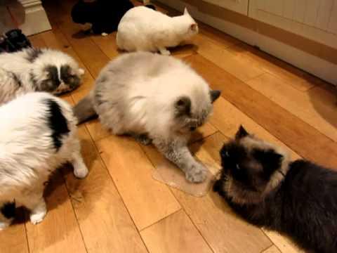 Funny catnip video