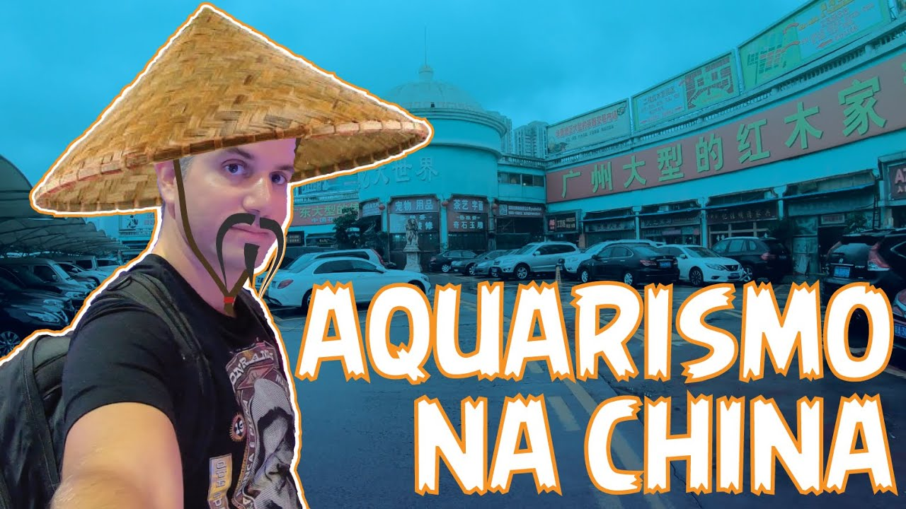 Aquarismo na China #PARTE 1