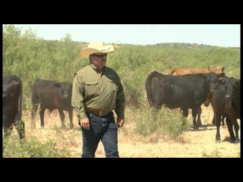 Region IV Matador Ranch
