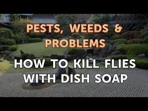 How to Kill Flies With Dish Soap