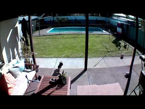 Blink Camera System