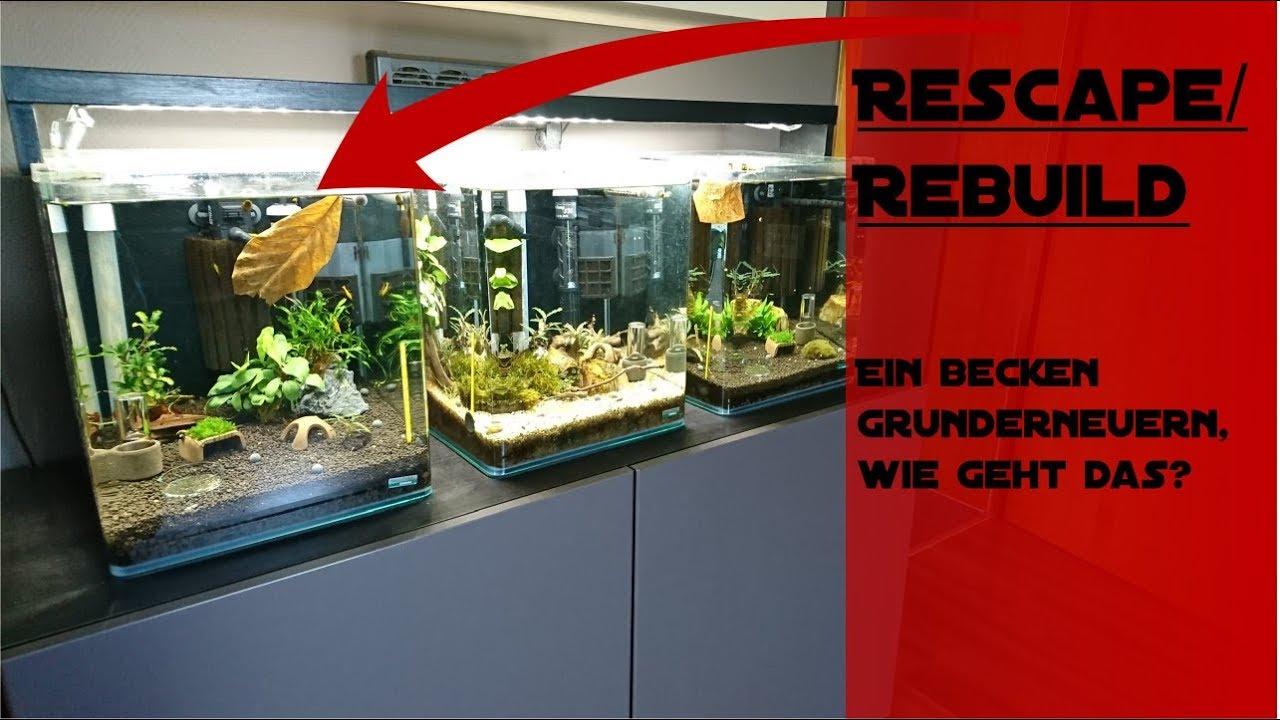 garnelen zucht aquarium grunderneuern youtube. Black Bedroom Furniture Sets. Home Design Ideas