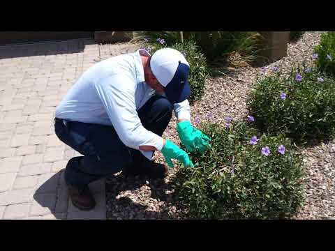 Arizona Pest Control Companies Must be Licensed!