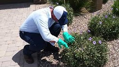 Arizona Pest Control Companies Must be Licensed!