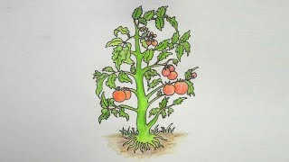 How to draw Tomato Tree step by step very easy