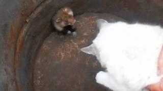 Мышка побила кота