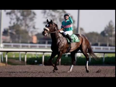10 Best Race Horses of All Time - Greatest Thoroughbreds