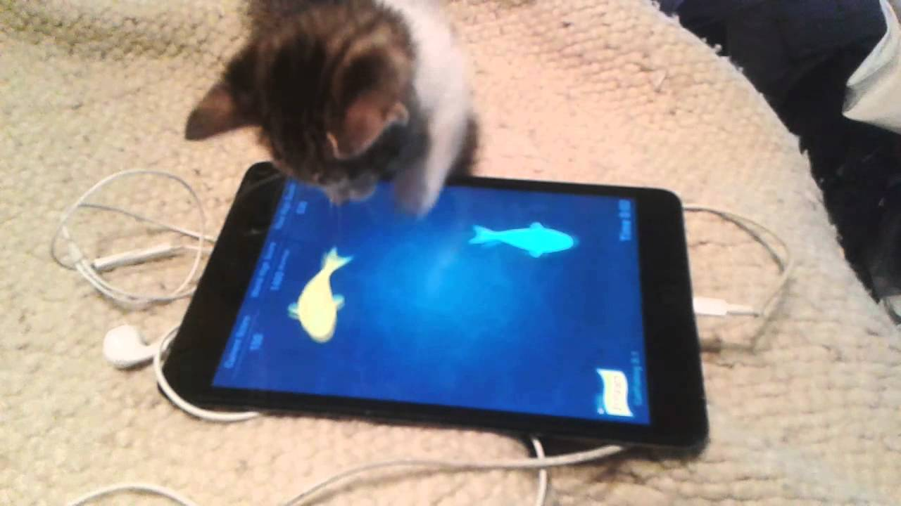 Dakota jugando cat fishing 2 1 friskies youtube for Friskies cat fishing