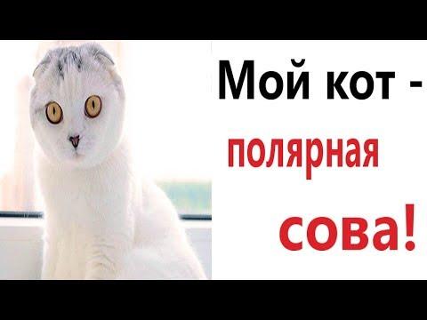 Лютые приколы. МОЙ КОТ – ПОЛЯРНАЯ СОВА!!! Самое смешное видео! Попробуй не засмеяться! - Domi Show