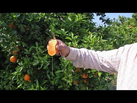 Valencia - Das Land, wo die Orangen blühen