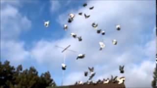 Николаевские голуби в Новом свете Крым 2015 (Калиевский С.Н)