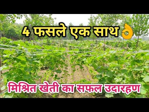 जानिए क्या है मल्टीलेयर मिश्रित खेती|amazing MultiLayer mixed organic farming Technique
