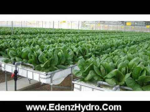 Hydroponic Lighting Systems, Magnetic Ballasts, Commercial Set Up - Detroit, Michigan