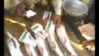 Valley jeand fishing tournament (Sialkot Pakistan On mangla lake) 6