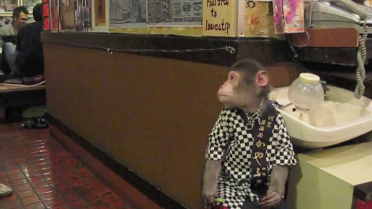 Le bar à singes, mieux que le bar à chats
